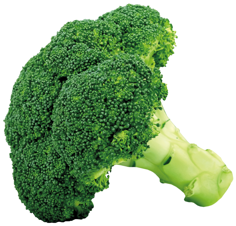Broccoli_PNG_Picture