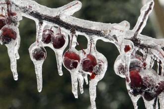 proteggere-piante-dal-freddo